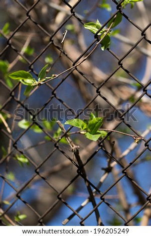 Steel wire mesh fence with trees.