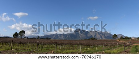 Stellenbosch wine region of South Africa - stock photo