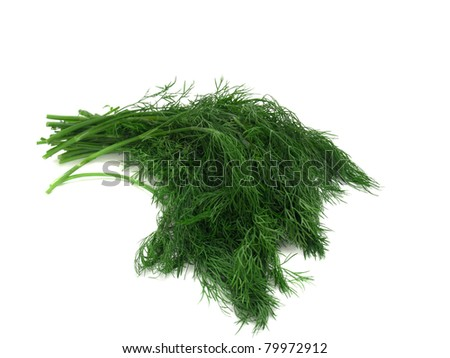 stems of fresh dill isolated over white background