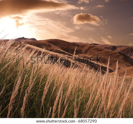 stems of reeds, a wilderness in the background at sunset - stock photo
