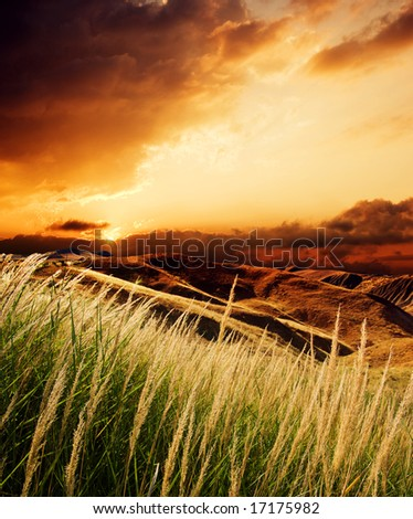 stems of rush at the sunset - stock photo