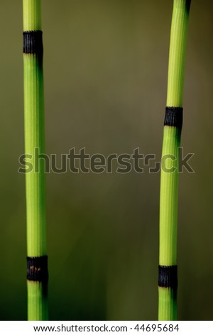 Stems of rush grass growing on the banks of the Grand Canyon - stock photo