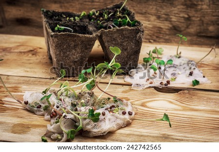 stems sprout plant in marl - stock photo