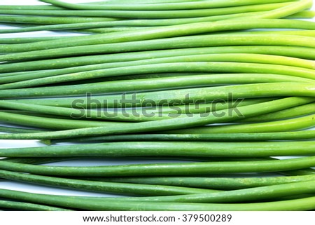 Stems/stalks of fresh green Allium Spring Onion flowers. - stock photo