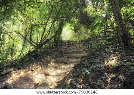 step way in deep forest photo - stock photo