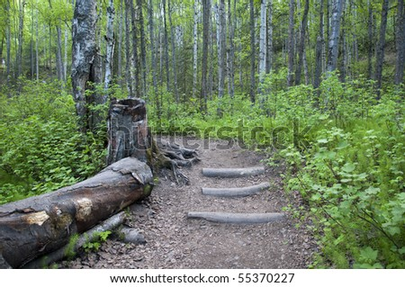 Stepped path through green woods with log on side