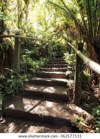 Steps in the rain forest at the Dandenong ranges, Melbourne 2015
