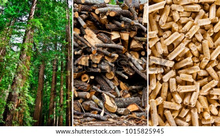 Steps of production wood pellets