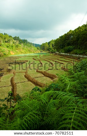 Steps rice filed in northern part of Thailand.