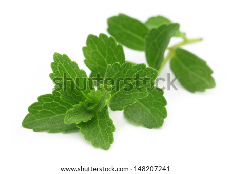 Stevia � A substitute of sugar - stock photo