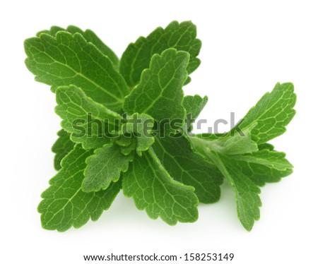 Stevia isolated over white background - stock photo