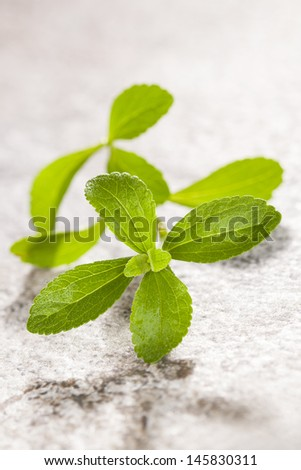 Stevia leaves isolated on bright stone background. Culinary and healthy cooking and eating. Fresh herbs concept. - stock photo