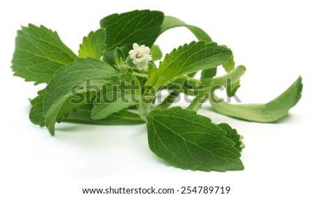 Stevia leaves with flower over white background - stock photo
