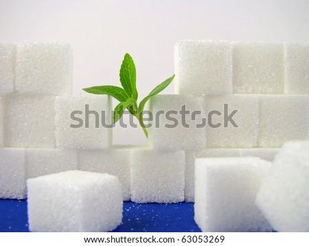 Stevia rebaudiana And A Broken Lump Sugar Wall - stock photo