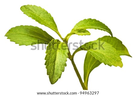 Stevia,  the herbal support for sugar