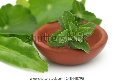 Stevia with other medicinal herbs over white background - stock photo