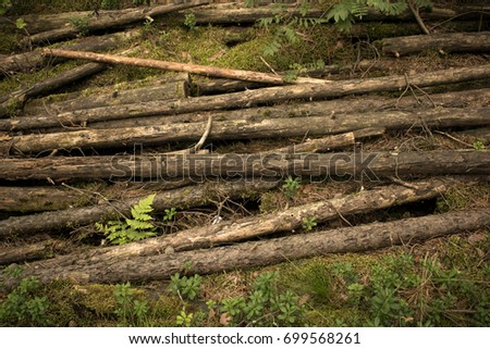 sticks lie in the woods