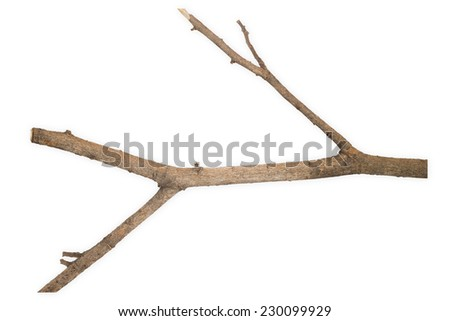 Sticks or twigs isolated on white background - stock photo