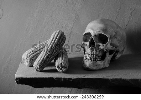 Still life art photography expired concept with human skull and expired corn black and white version - stock photo