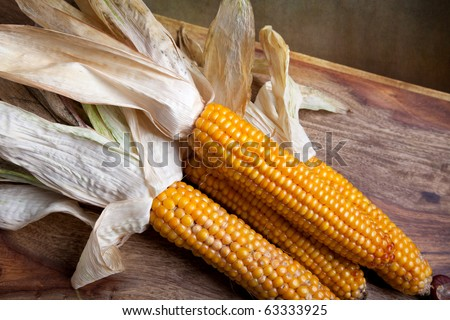 Still Life Autumn concept image with corn cobs