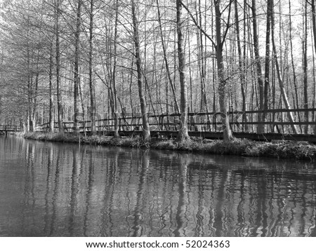 still life black and white nature - stock photo
