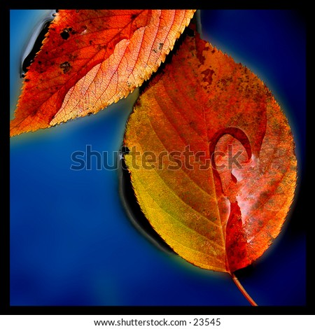 Still life composition of autumn leaves in blue water. - stock photo