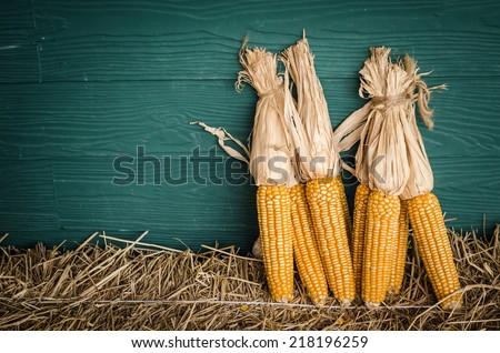 Still life corns put on hays.  - stock photo