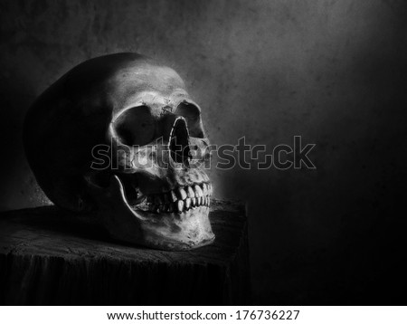 Still life fine art photography on human skeleton on wood log and red background black and