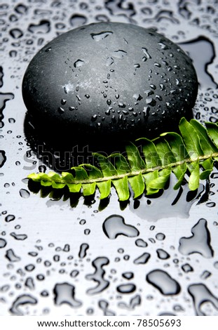 Still life green fern with stones in water drops