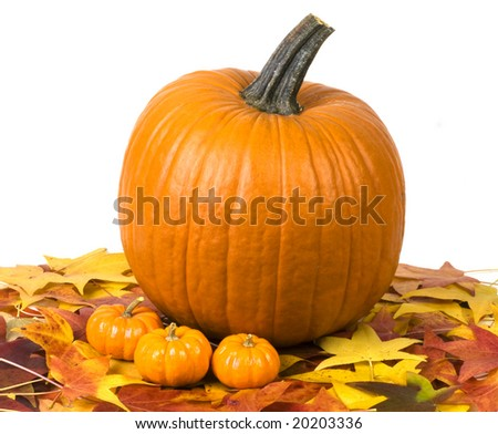 Still life image with a pumpkin, small gourds, and fall leaves