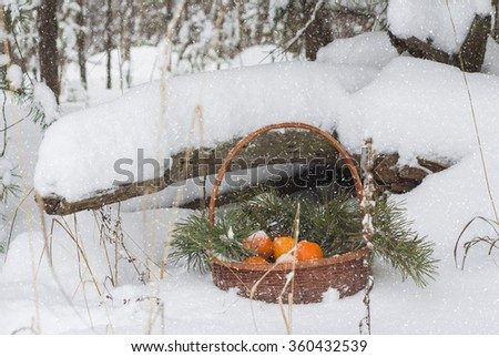 Still life in the winter forest. Basket of tangerines stands under the tree.