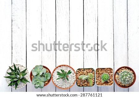 Still Life Natural Mix of Six Cactus Plants  on Vintage White Wood Background Texture - stock photo