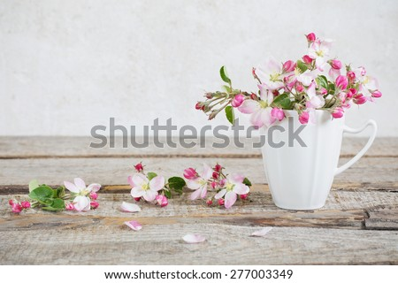 Still life of apple blossom flowers - stock photo