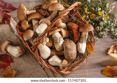 Still life of boletus mushrooms in a basket / studio photography of edible mushrooms in a wicker basket  - stock photo