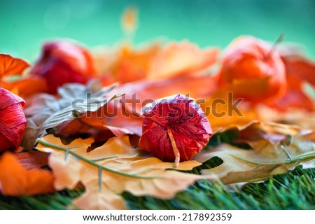 Still Life of Chinese Lantern Seed Pods and Autumn Leaves with Selective Focus - stock photo