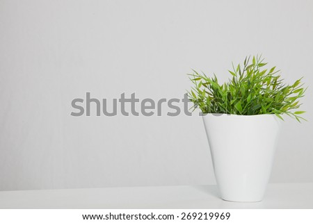 Still Life of Green Potted Plant in White Planter on Table with Copy Space