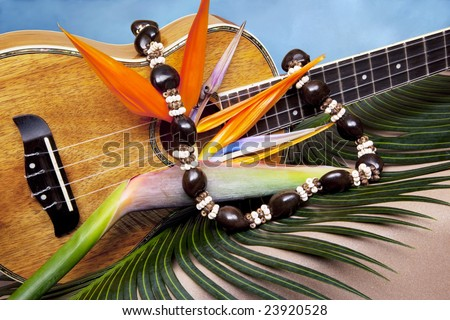 Still life of Hawaiian koa wood ukulele, with fresh bird of paradise flower and kukui nut lei, on blue backgound