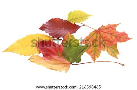 Still Life of Various Colorful Autumn Leaves on White Background - stock photo