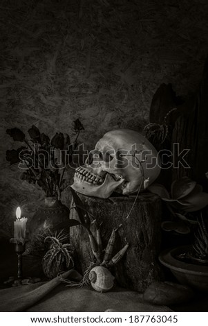 Still life on a human skull surrounded by cactus and dried flowers in a vase on the side.