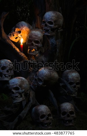 still life photography : group of many skull on the roots abstract concept