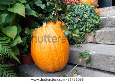 Still Life: pumpkins on the steps of the threshold - stock photo