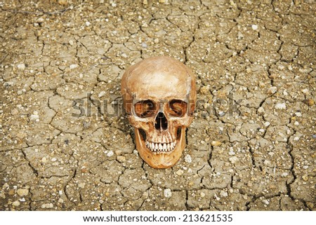 still life skull human on cracks dry ground  - stock photo