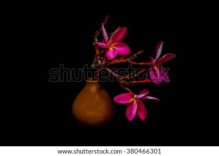 still life vase with flowers Black background.
