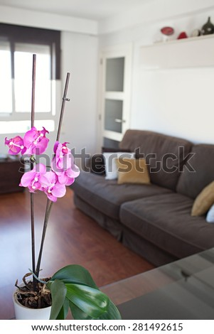 Still life view of an apartment living room with an orchid flower on a dining table in a bright home interior. Cozy and comfortable family living room view, house interior and home living detail. - stock photo