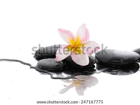Still life with Beautiful frangipani and black stones   - stock photo
