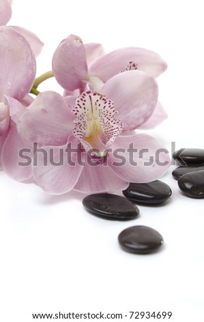 Still life with beautiful orchid and black orchid on the white background
