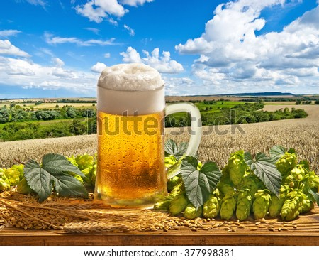 still life with beer glass, barley and hops - stock photo