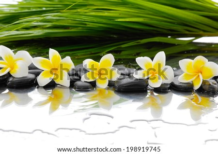 Still life with Black stones and row of frangipani and palm leaf  - stock photo