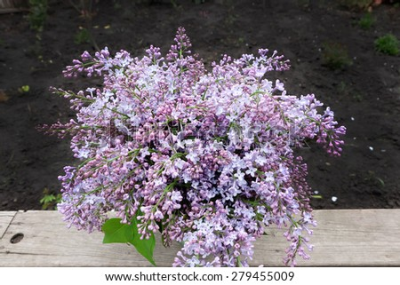 Still life with blooming branches of lilac - stock photo