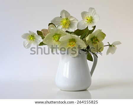 Still life with bouquet of spring flowers hellebores in vase. Flower is also called Christmas rose, Lenten rose, Black hellebore, Winter rose, Helleborus niger. Blooms in late winter and early spring - stock photo